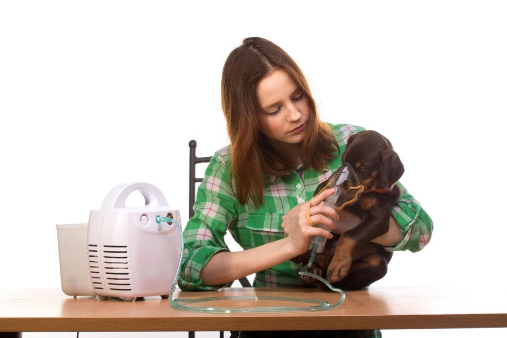 Bronquitis en perros: síntomas, causas y tratamiento
