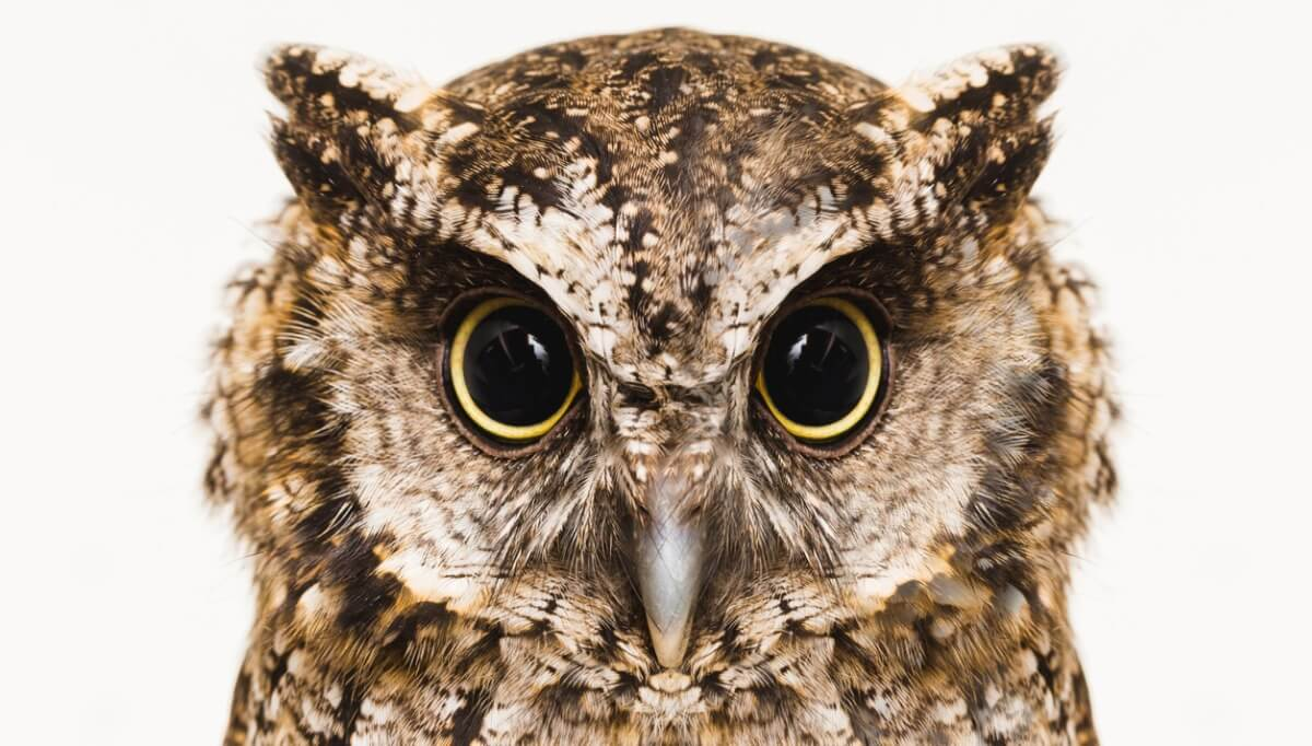 Owls can turn their heads.