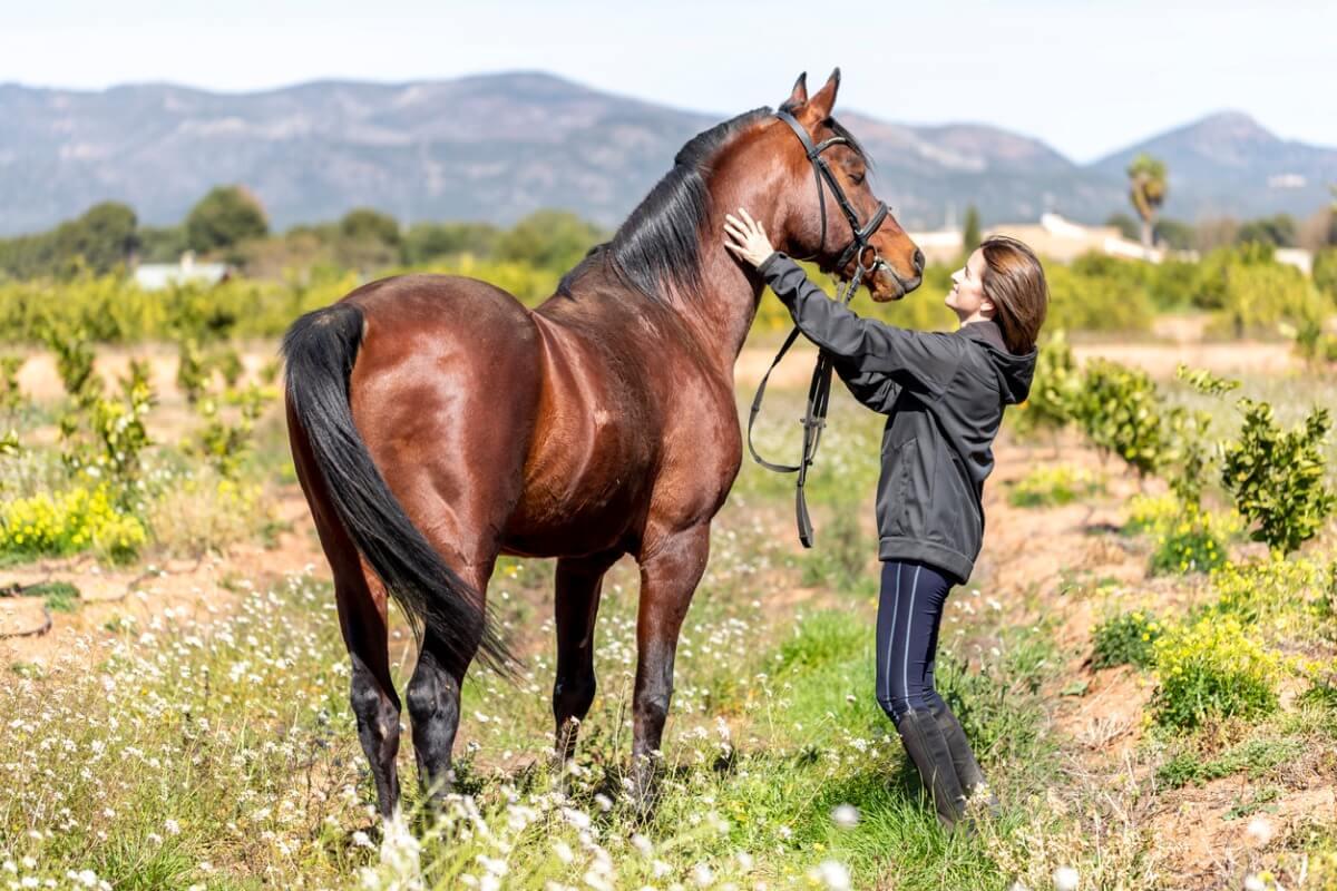 Un cheval hispano-arabe et son tuteur.