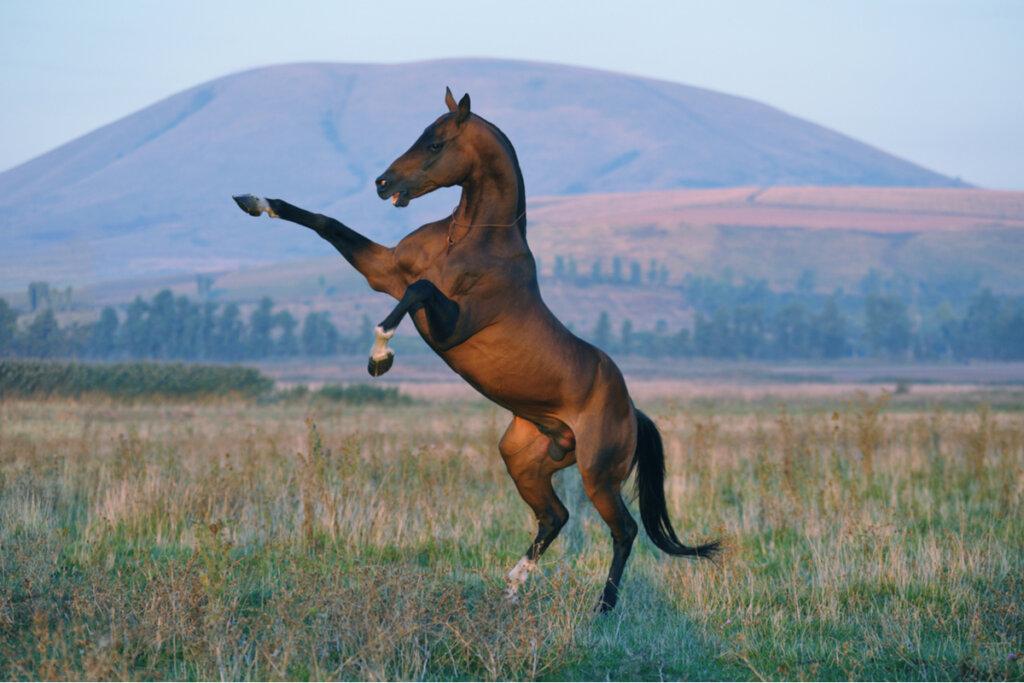 Comportamiento de los caballos