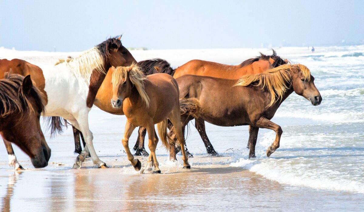El comportamiento de los caballos va marcado por su condición de presas.