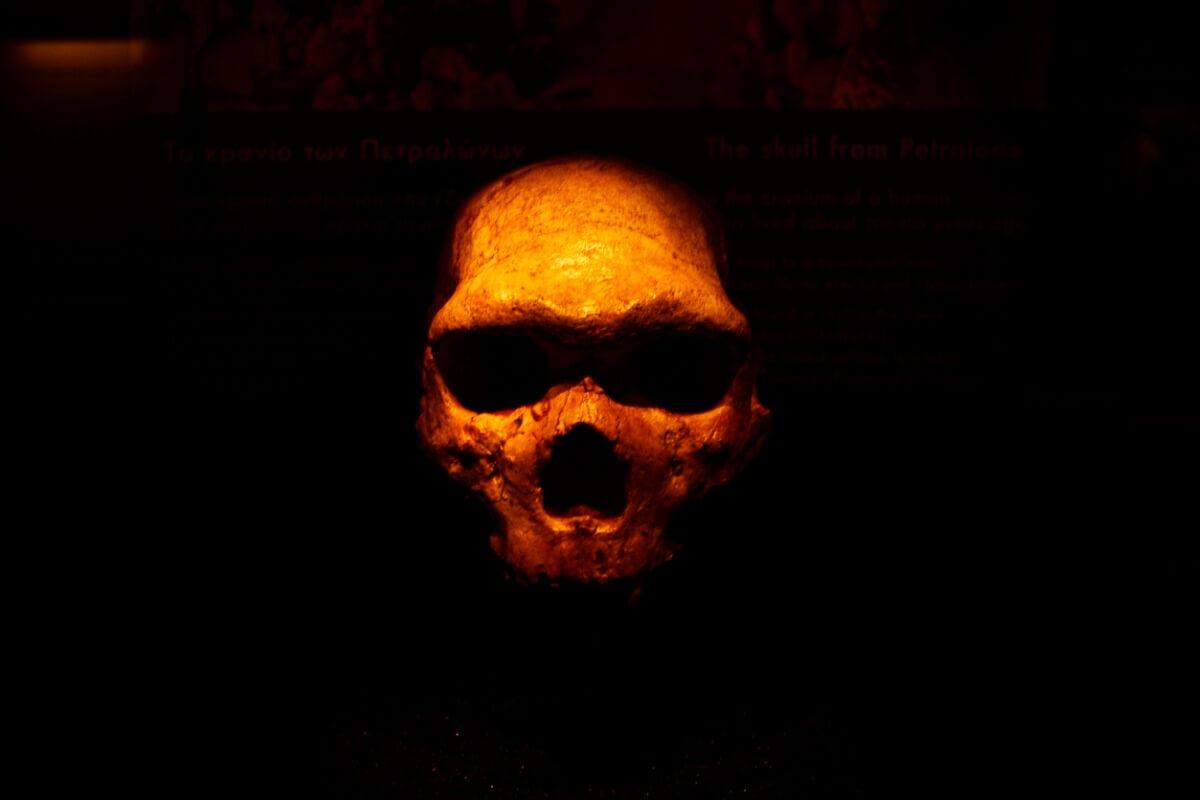 A caveira de um Neandertal.