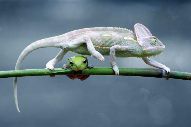6 diferencias entre reptiles y anfibios
