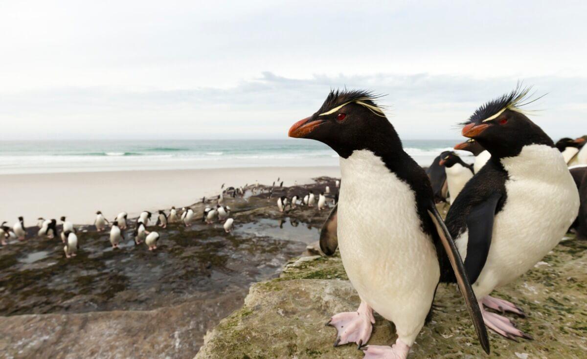 Un pingüino.