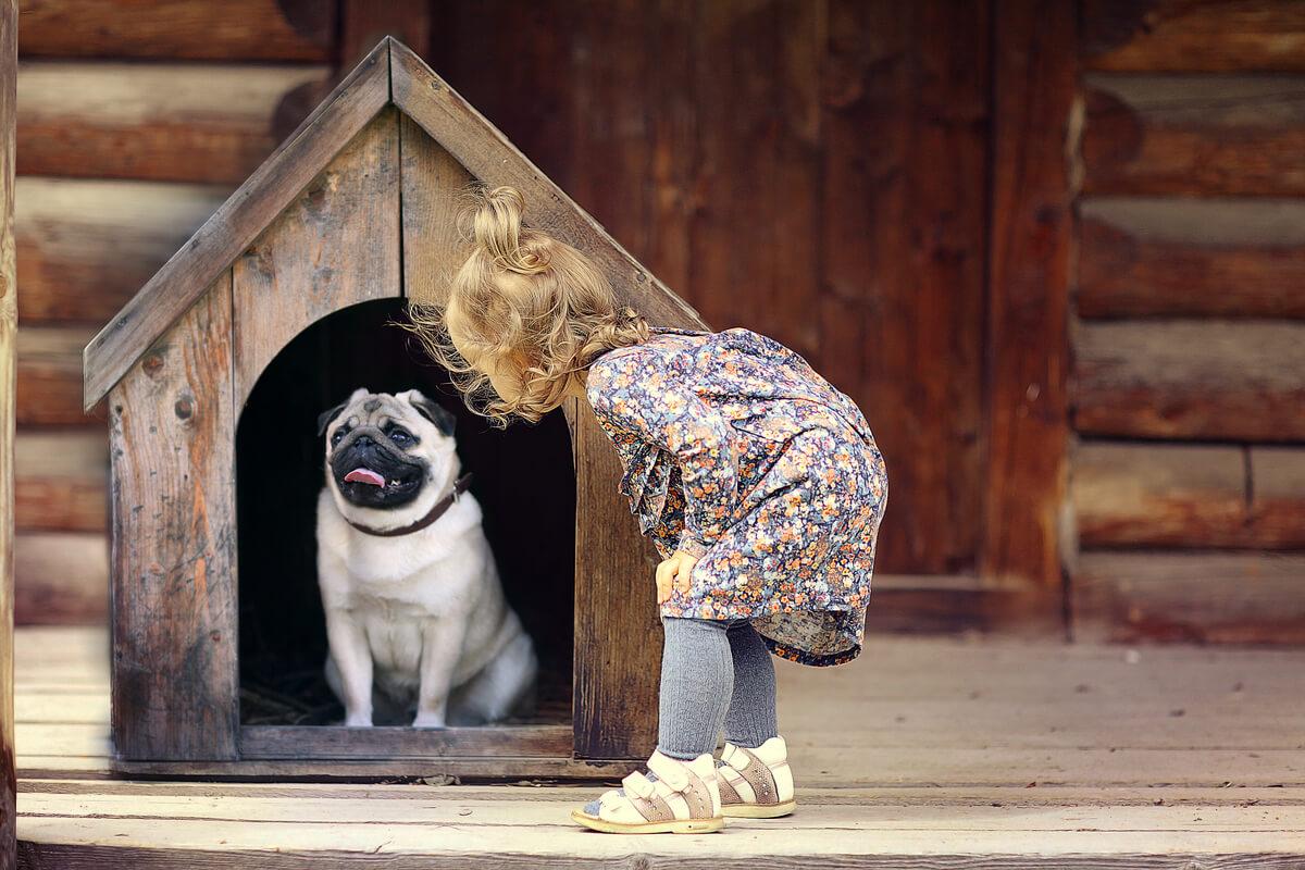 Las casas para perros.