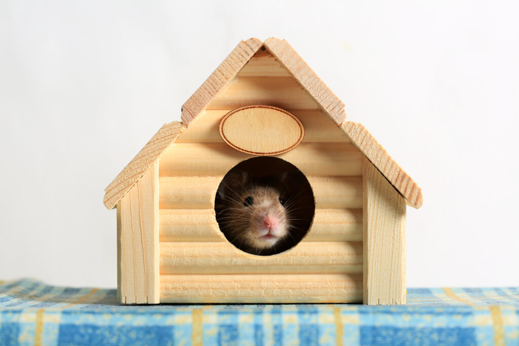 Casas para hámsters: tipos y recomendaciones