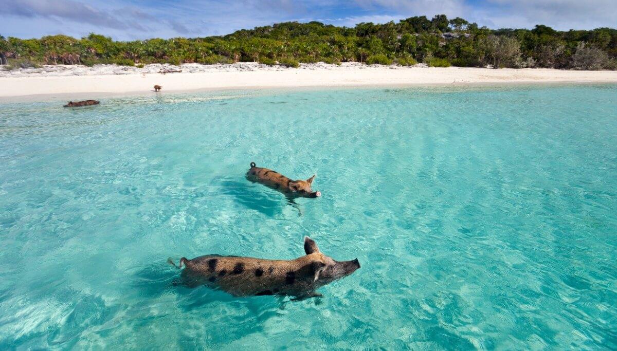 Uma das ilhas onde vivem apenas animais.