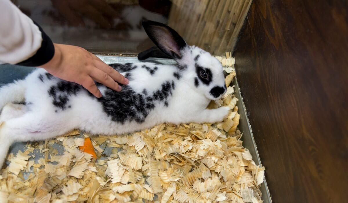 Existen muchos cuidados para los conejos recién nacidos y su madre.