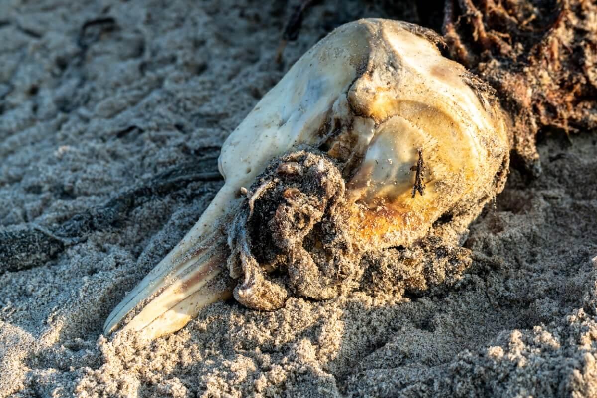 Un delfín muerto en la playa.