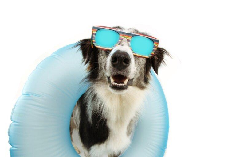 Síndrome postvacacional en perros: ¿por qué ocurre?