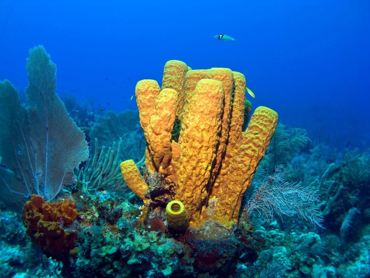 Uno de los animales marinos que eliminan virus.