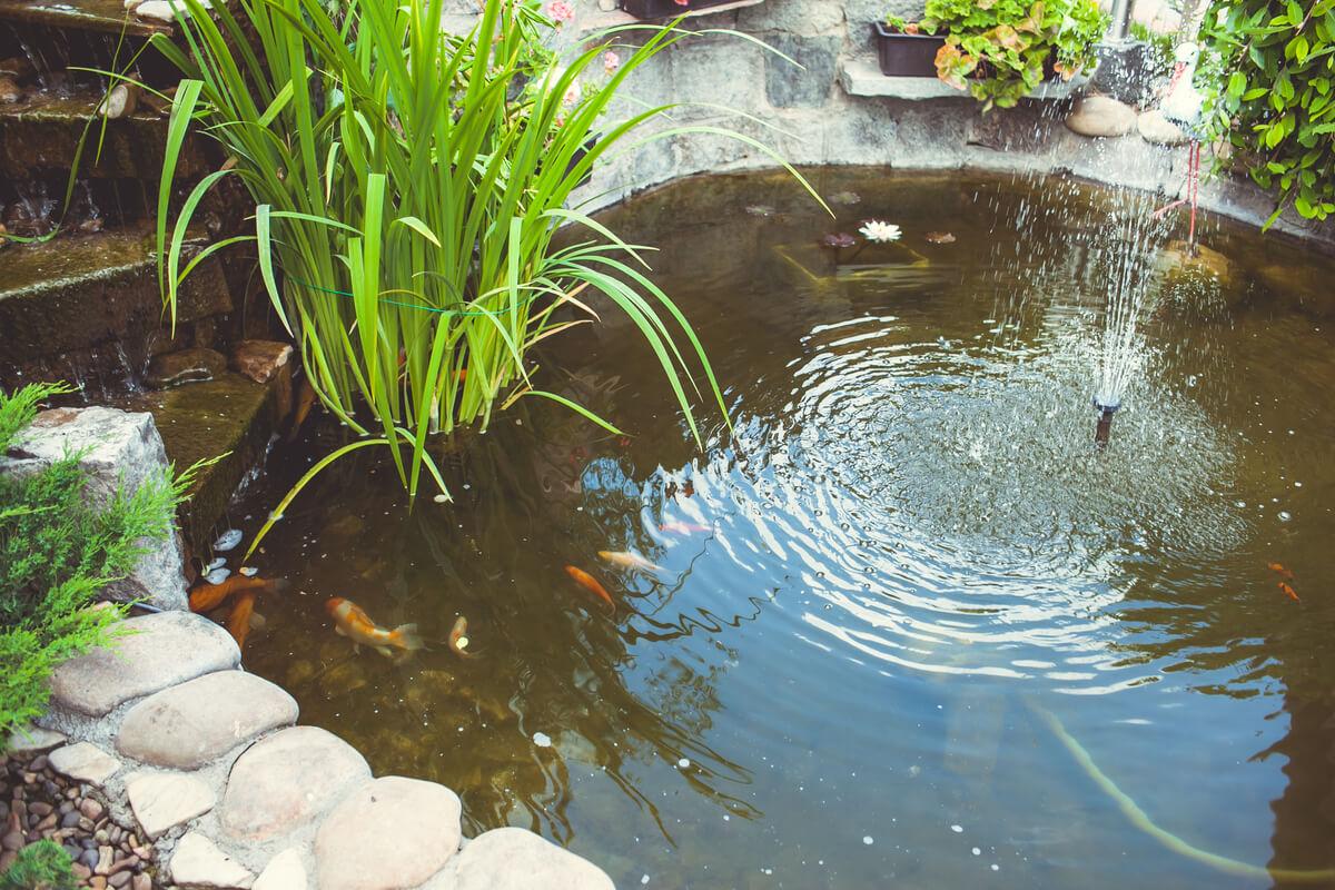 Un estanque rústico al aire libre.