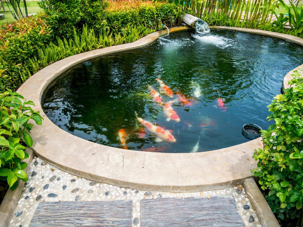 ¿Cómo construir un estanque para peces?