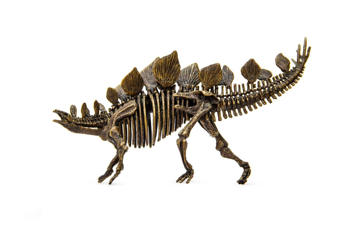 Le squelette d'un stégosaure.