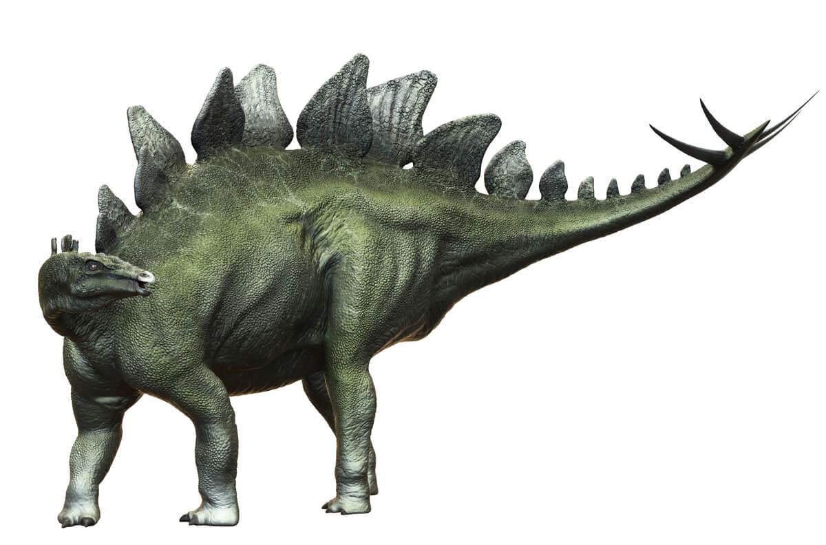 Um estegossauro em um fundo branco.