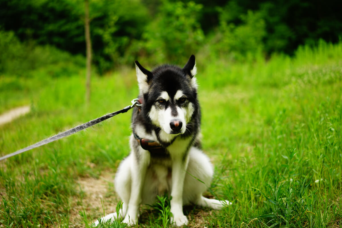 3 consejos para evitar el estreñimiento en perros