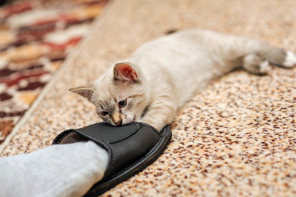 ¿Por qué los gatos muerden los tobillos?