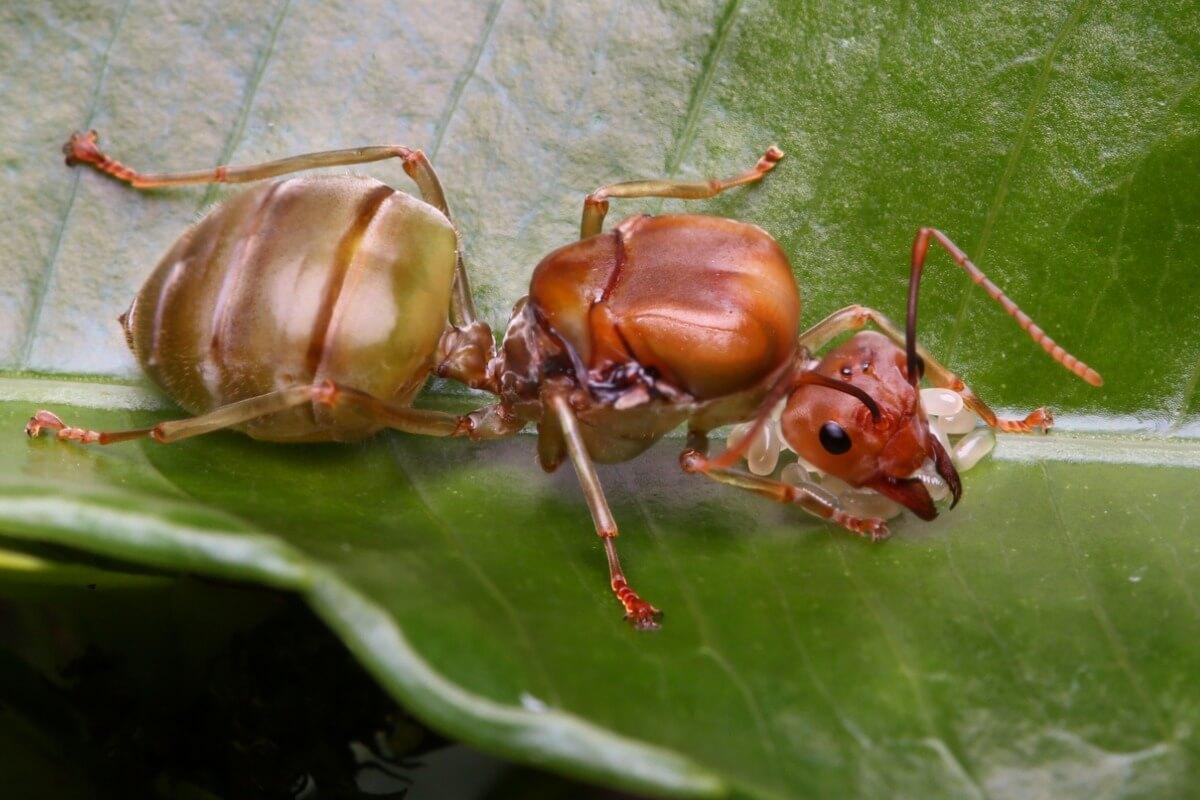 Las hormigas son animales que viven en madrigueras.