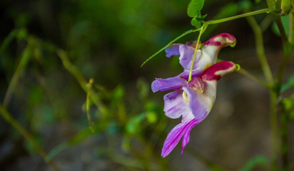 6 flores que parecen animales