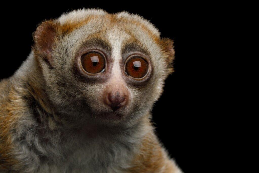 5 curiosidades sobre los mamíferos