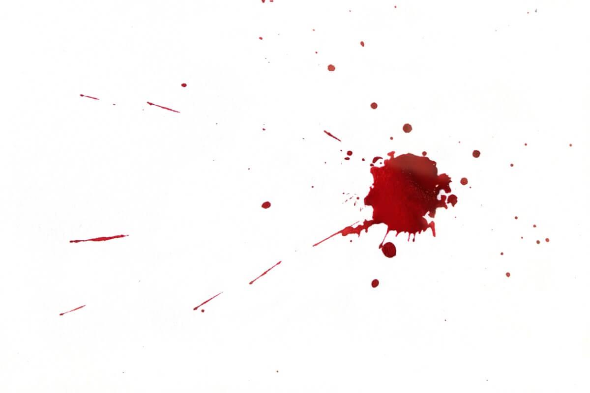 Animais vampiros se alimentam de sangue.