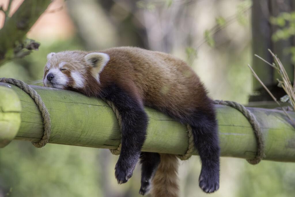 Animales que duermen de pie: ¿cómo lo hacen?