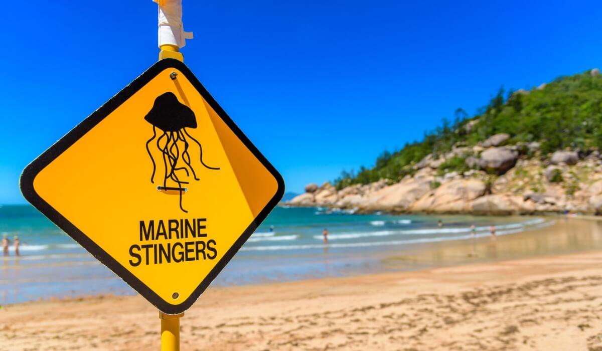 Esta espécie é um perigo considerável na costa da Austrália.