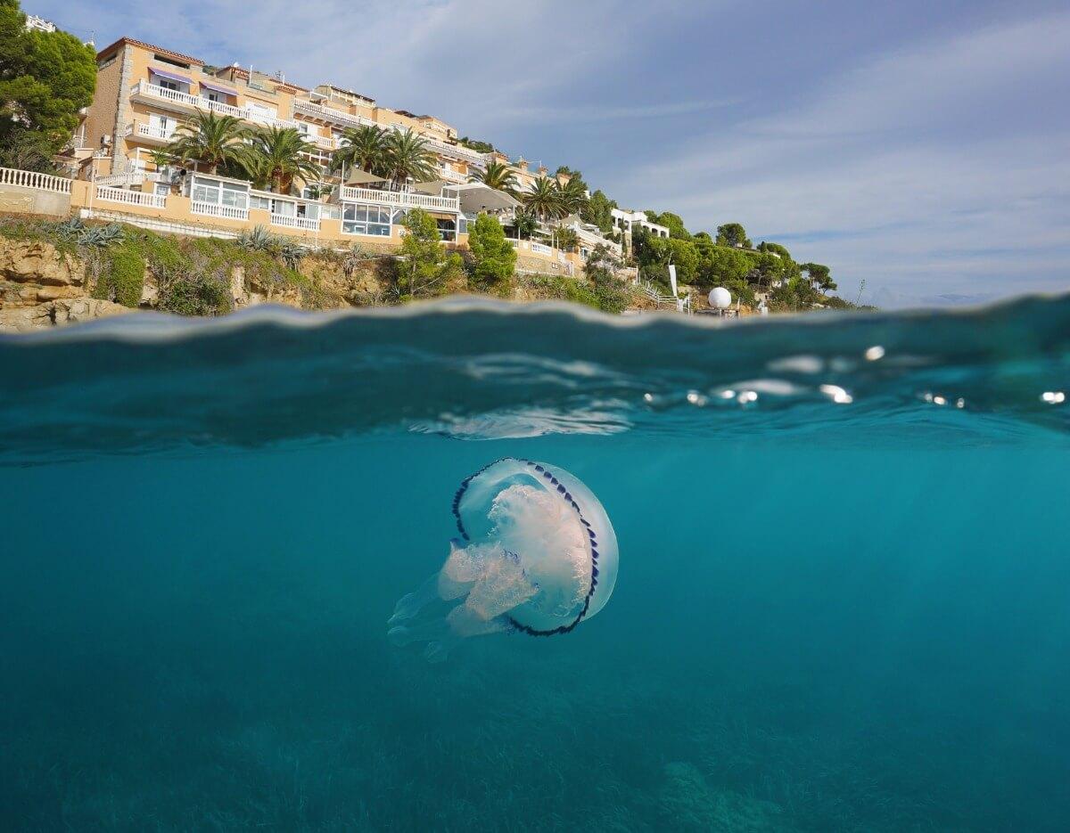 Una medusa en la playa de un hotel.