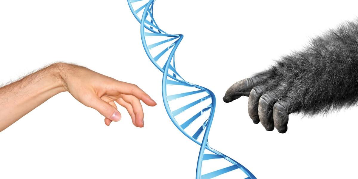 E se os Neandertais não estivessem extintos?