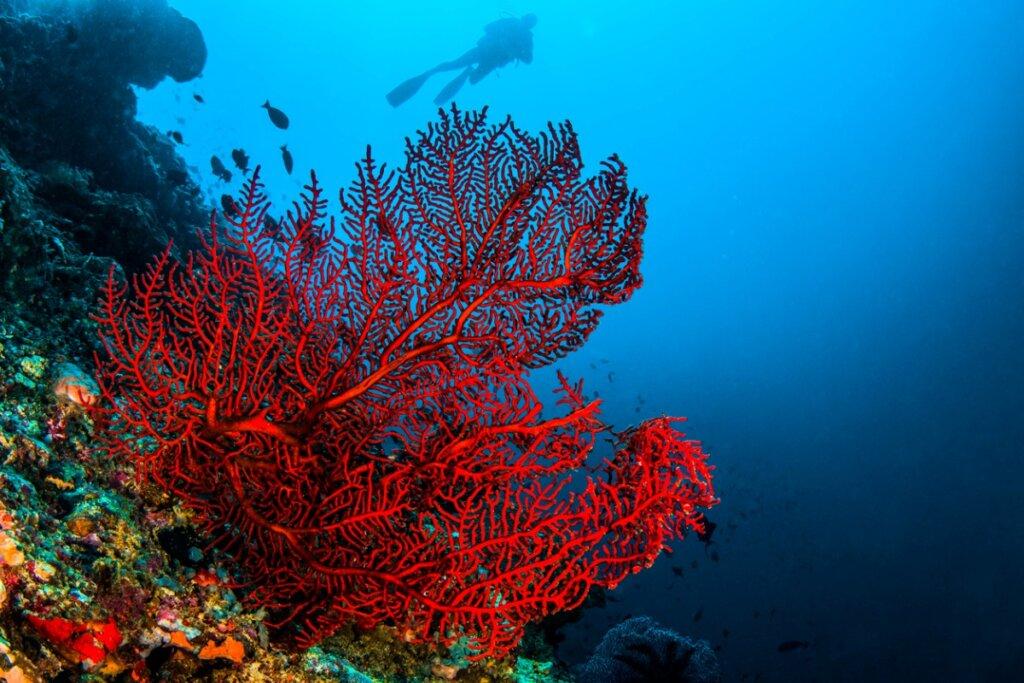 4 tipos de corales