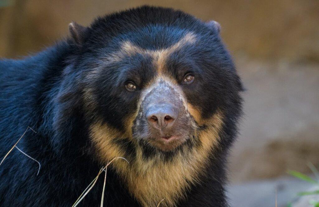 8 animales en peligro de extinción en Ecuador