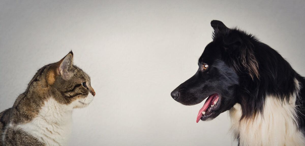Un perro y un gato se miran a los ojos.
