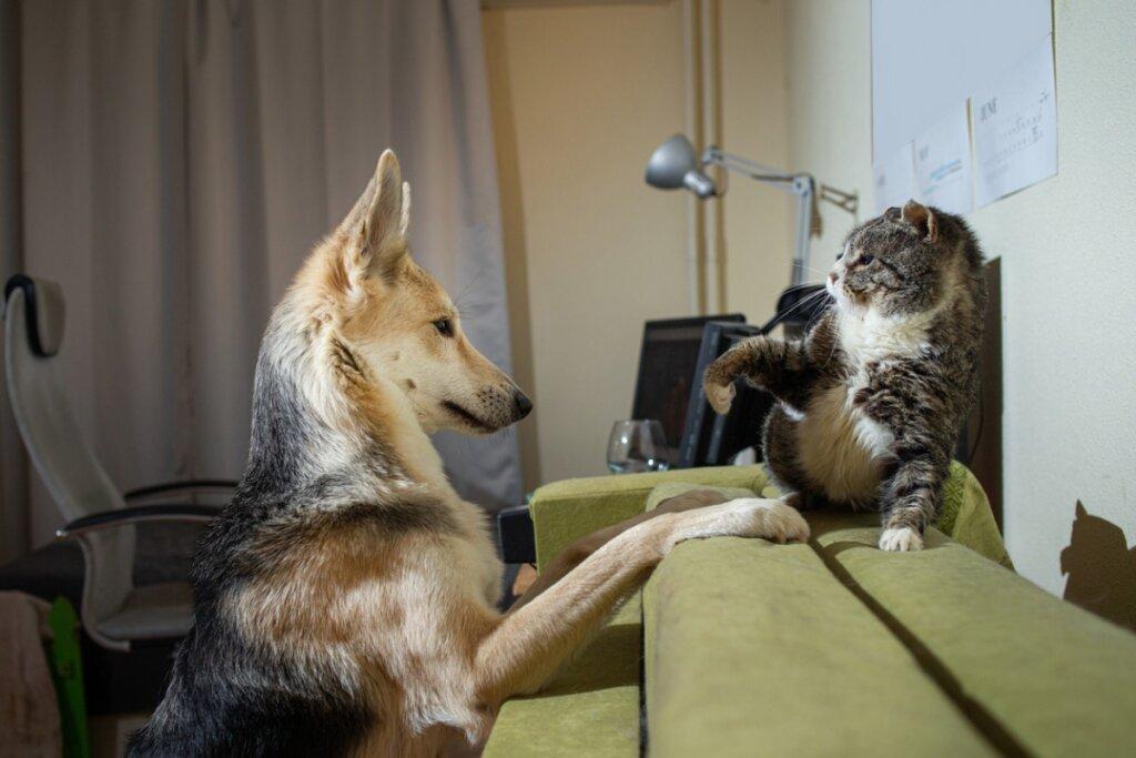 ¿Por qué se pelean los perros y los gatos?