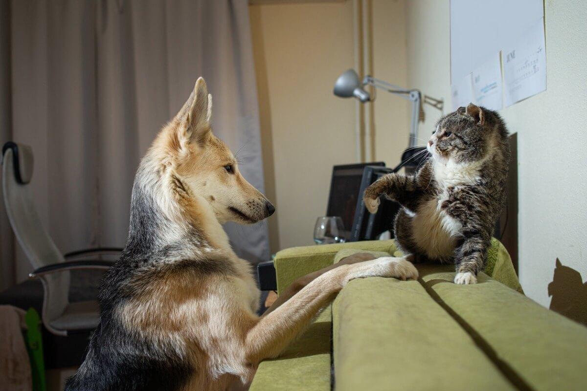 Les chats et les chiens se battent-ils vraiment ?