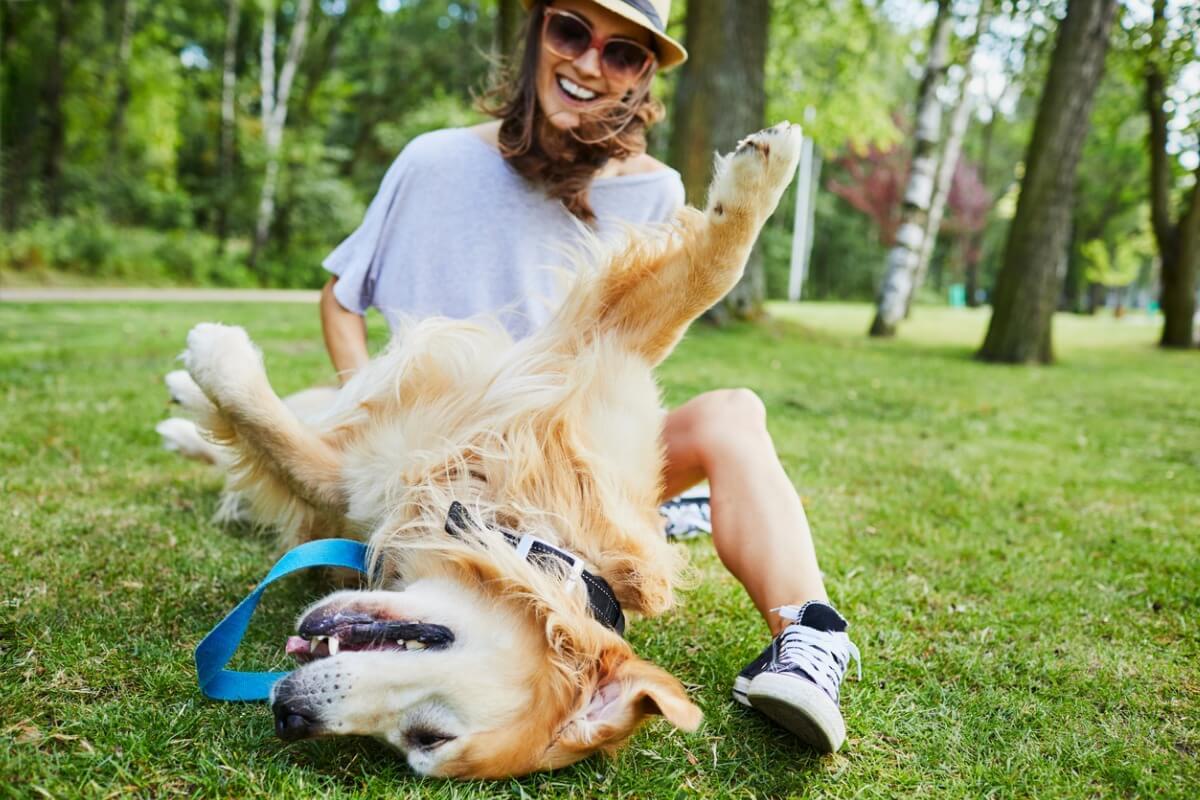 Perché ai cani piace farsi graffiare la pancia?