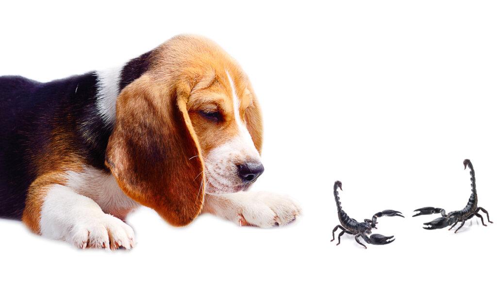 ¿A qué le temen los perros?