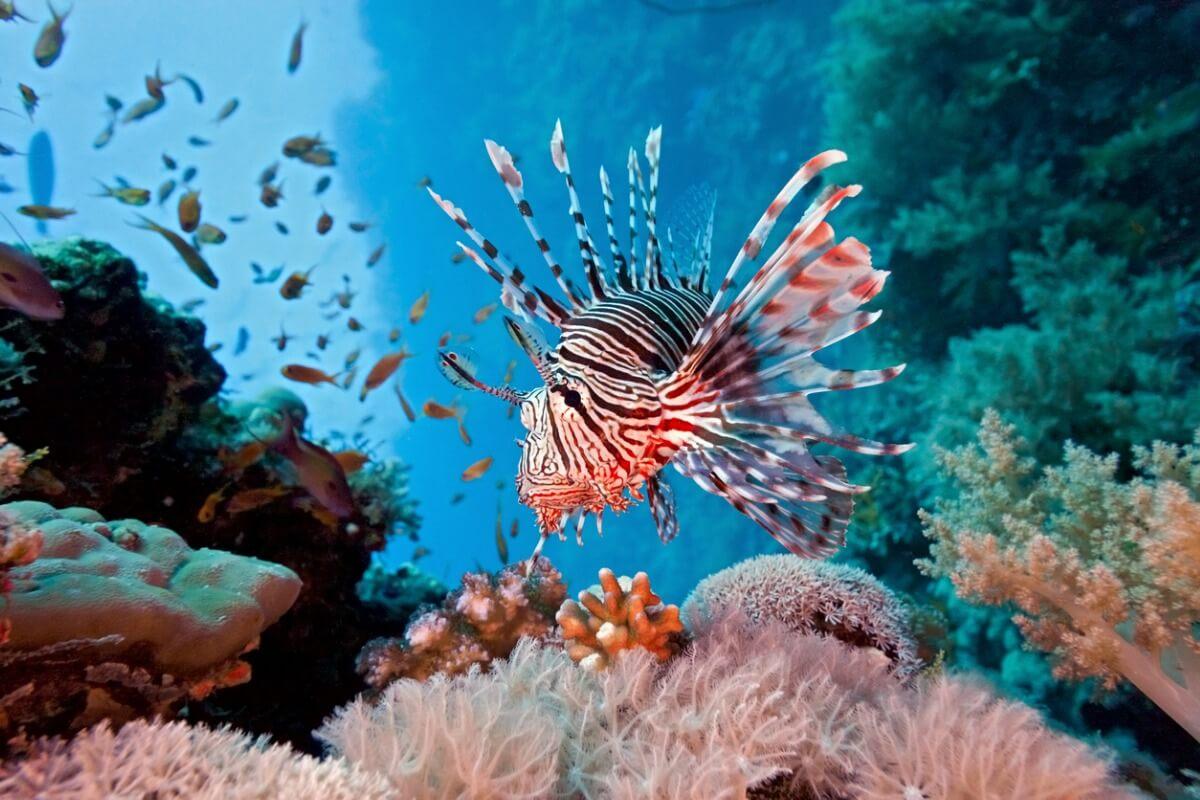 6 animales acuáticos que son especies invasoras