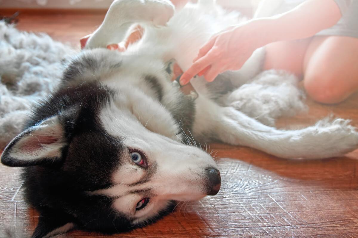 Problemas digestivos en perros: síntomas y causas