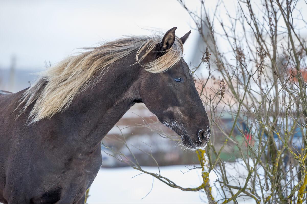 Las razas de caballos pueden ser muy bonitas.