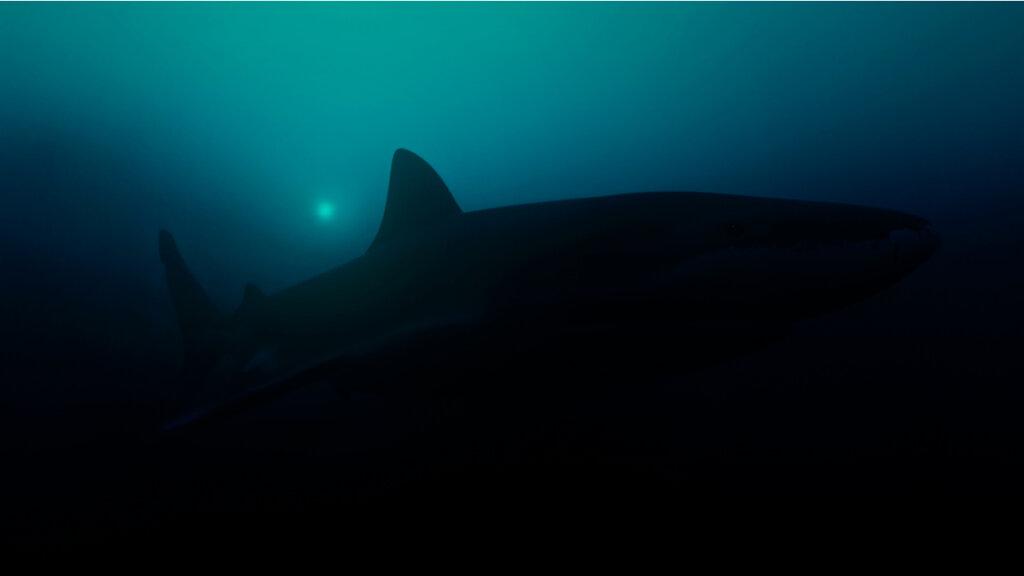 Hallan el tiburón luminoso más grande del mundo