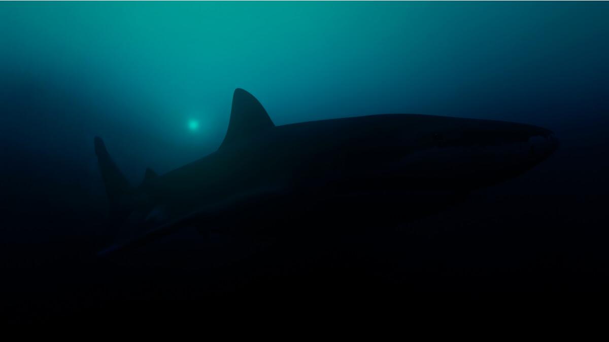 Ein Hai in den Tiefen des Meeres