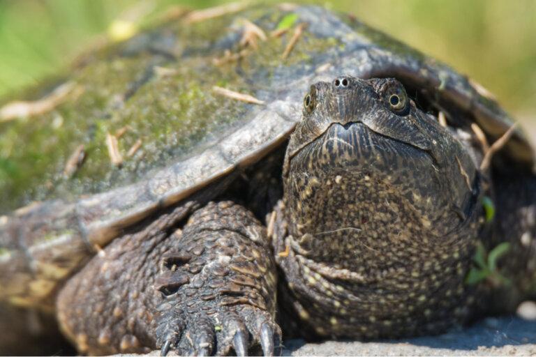 5 enfermedades comunes en tortugas