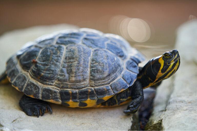 100 nombres para tortugas