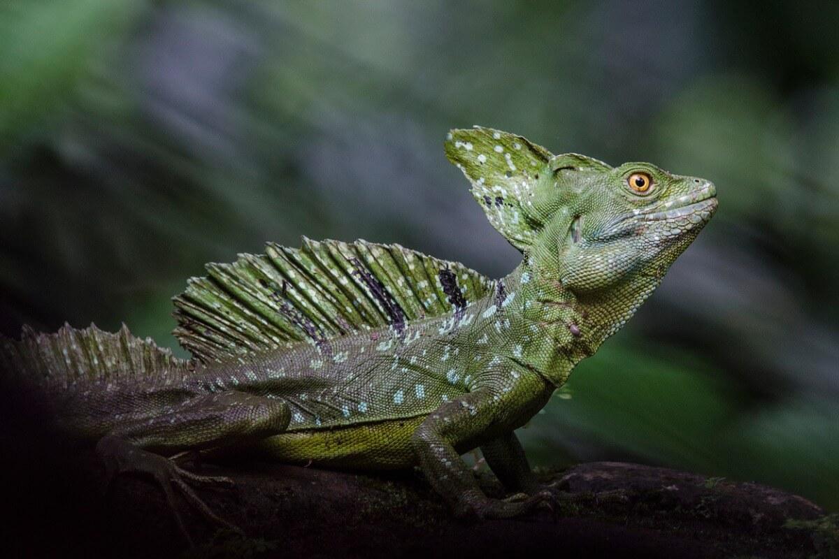 Los lagartos venenosos son múltiples.