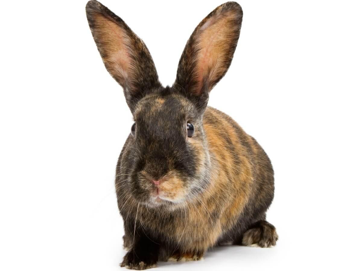 Il comportamento dei conigli è molto curioso.