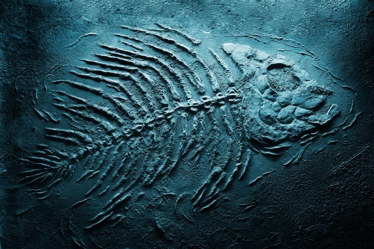Un fossile bleu d'un poisson.