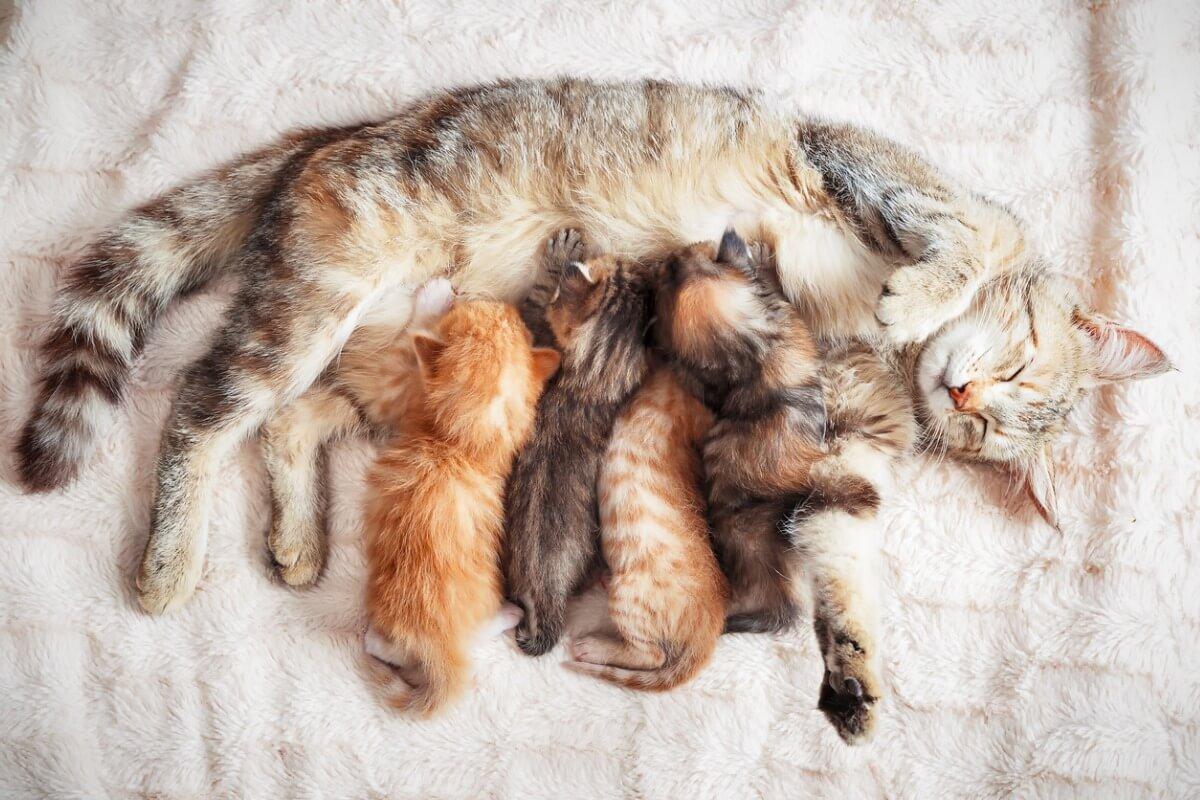 Una camada de gatos.