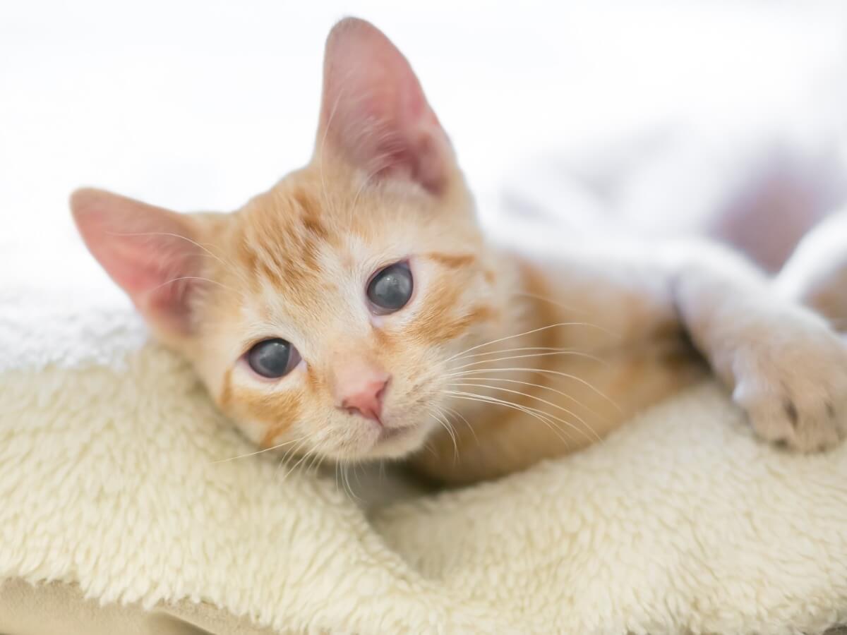 Cuidar de un gato ciego requiere armarse de paciencia.