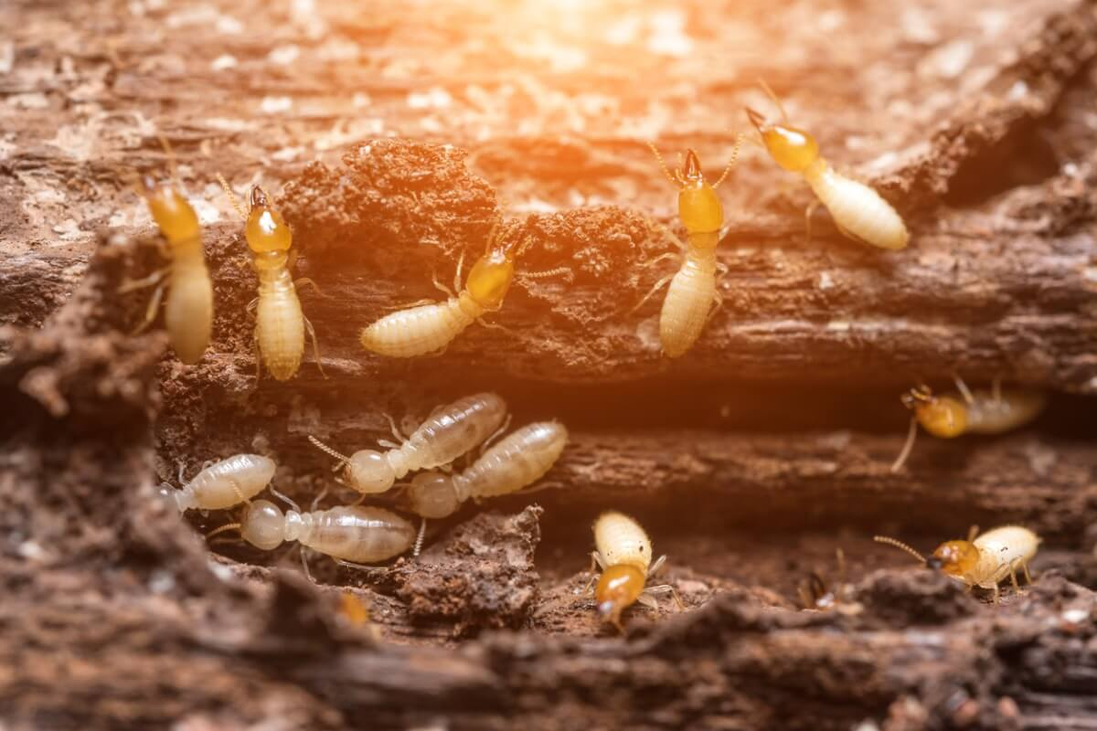 Le termiti sono animali che costruiscono le proprie case.