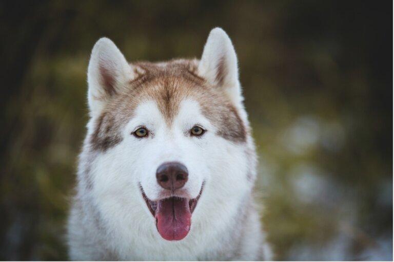 Adiestramiento en positivo en caninos: qué debes saber